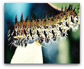Mopane worm, list of high protein foods