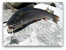 Arctic char, list of high protein foods